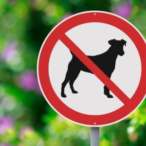 Most will say it is not acceptable to take a pet to a cemetery.